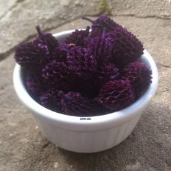 Graines violettes décoratives