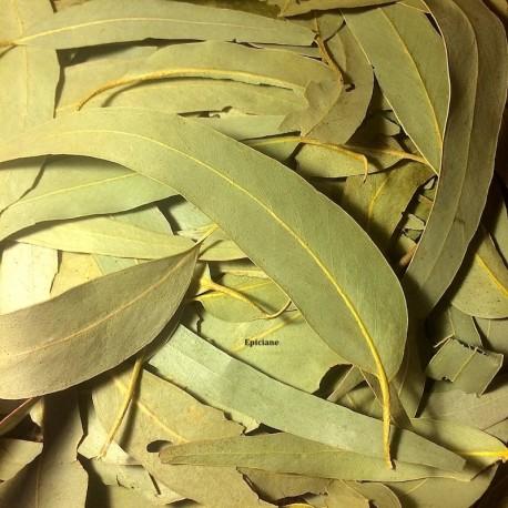 Eucalyptus feuilles entières