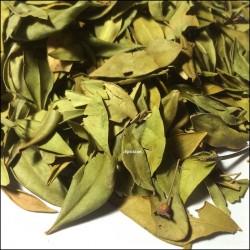 Myrte en feuilles