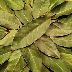 Laurier feuilles de Provence